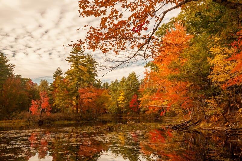Un lago hermoso en los colores hermosos del otoño del bosque del otoño, la superficie tranquila del lago, imágenes de archivo libres de regalías