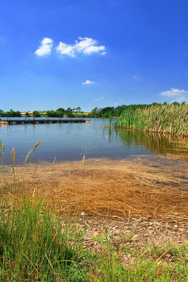 Un lago inglese immagine stock libera da diritti