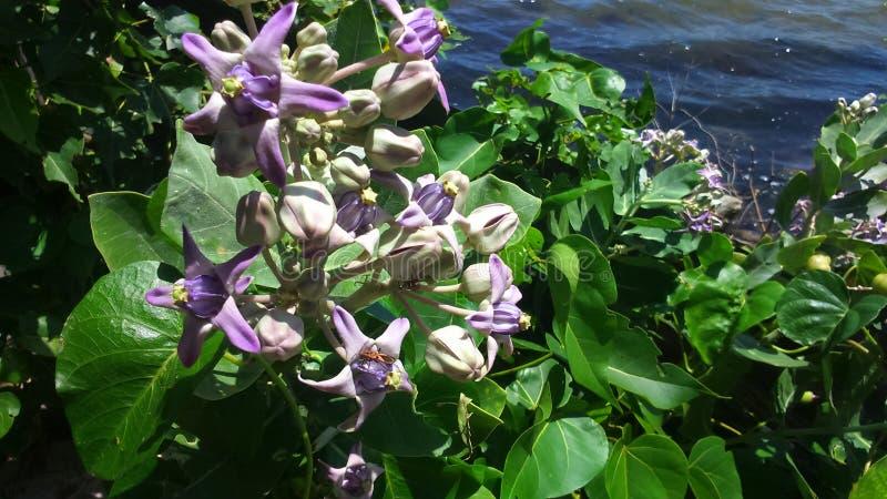 Un lago próximo flowers hermosas foto de archivo
