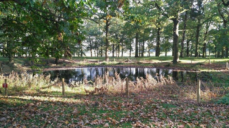 Un lago rodeado por los árboles imagenes de archivo