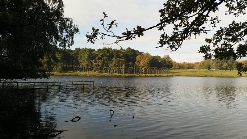 Un lago rodeado por los ?rboles fotos de archivo