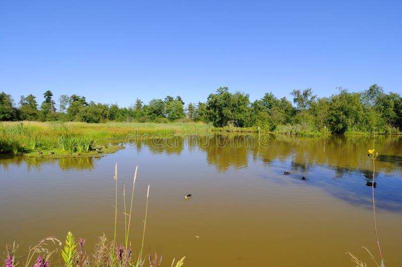 Un lago in un santuario di uccello migratore fotografie stock libere da diritti