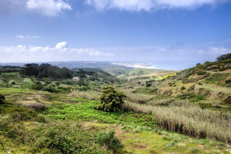 Un lanscape salvaje de la hierba verde imagen de archivo