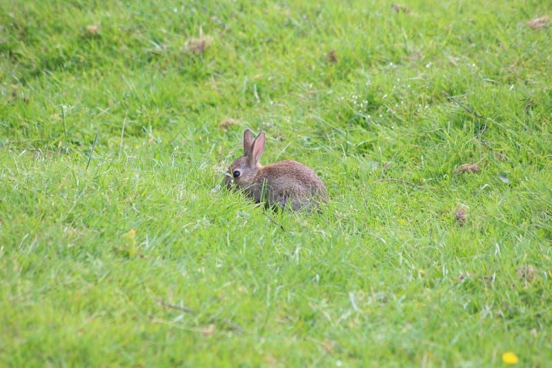 Un lapin photographie stock