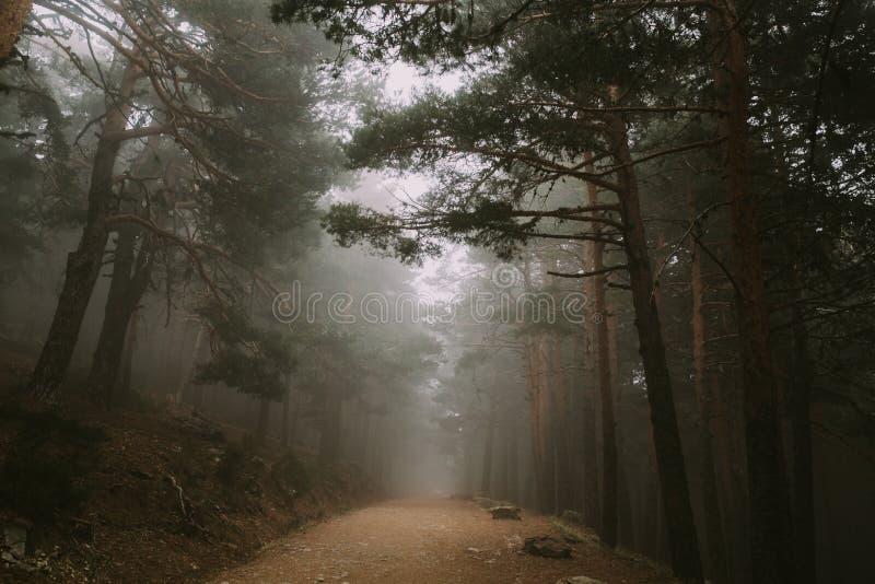 Un largo camino en el medio del bosque con la niebla encima de ella fotos de archivo libres de regalías