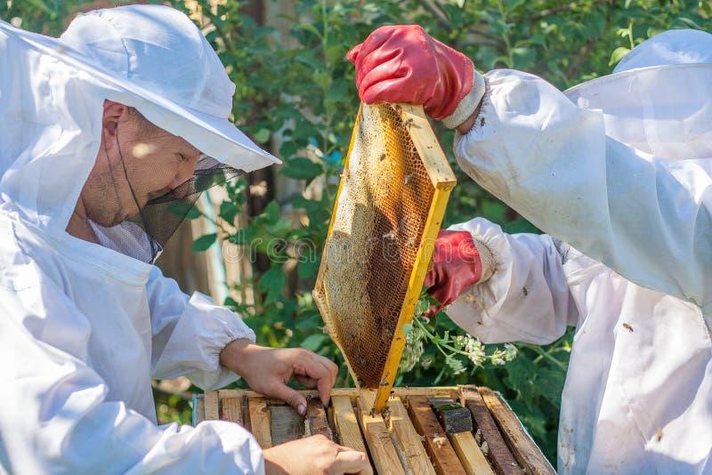 Un lavoro di due apicoltori nell'arnia fotografie stock