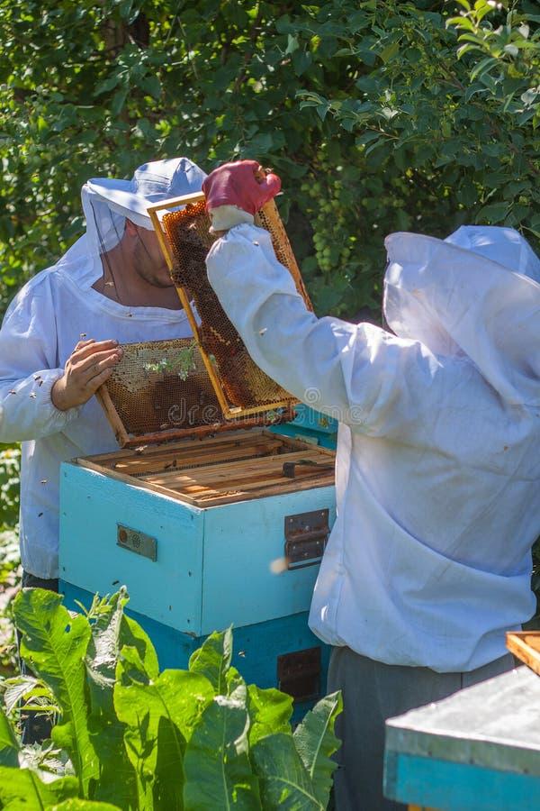 Un lavoro di due apicoltori nell'arnia fotografia stock