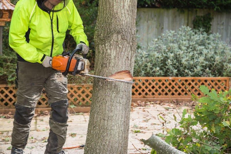 Un leñador corta un árbol con una motosierra fotografía de archivo libre de regalías