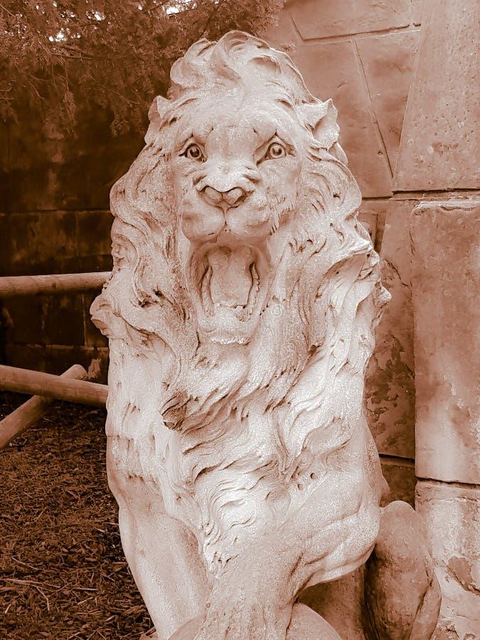Un leone fotografia stock