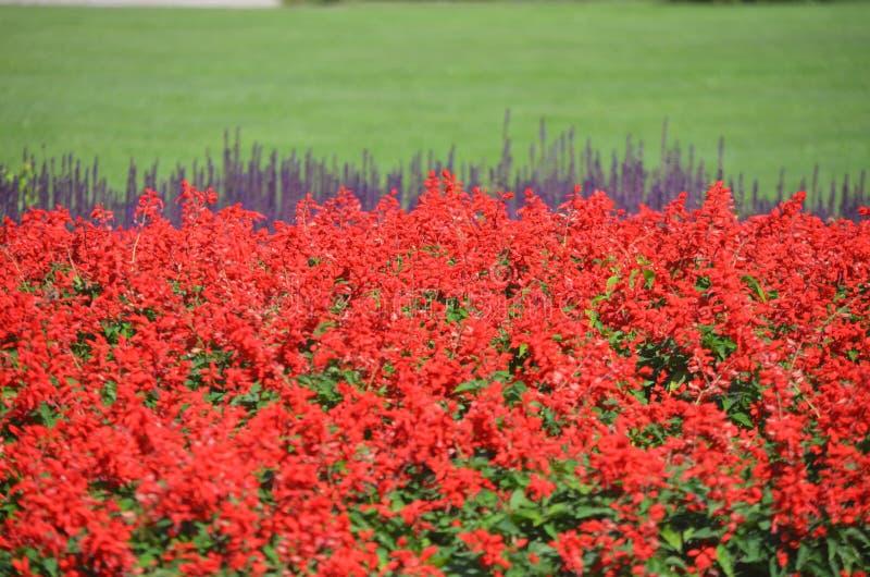 Un letto di fiore di 2 fiori di colore immagini stock