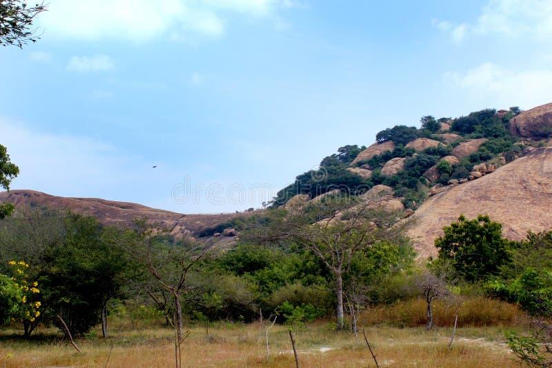 Un letto ha modellato la vista di bella collina della roccia del complesso sittanavasal del tempio della caverna immagine stock