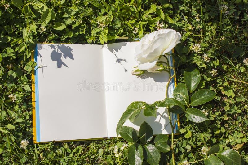 Un Libro Abierto Con Páginas Vacías, Una Flor Blanca De La Rosa Y Un ...