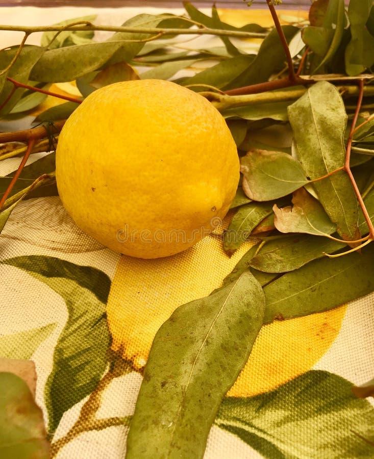 Un limón fresco imagen de archivo