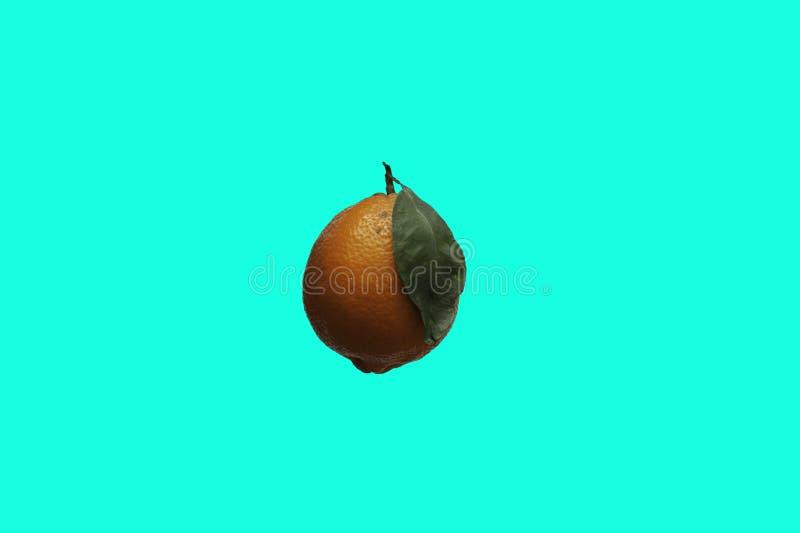 Un limone arancio isolato di Meyer sopra un fondo complementare di colore fotografia stock