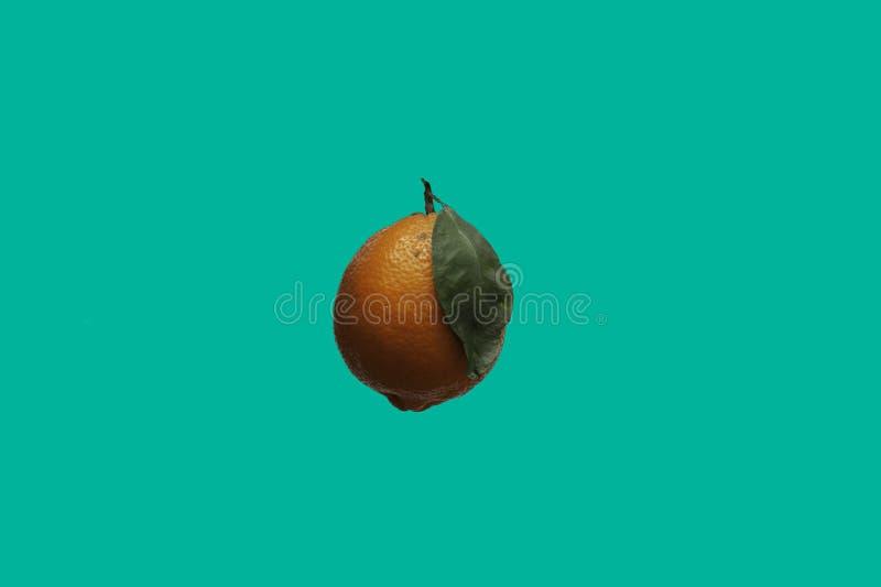 Un limone arancio isolato di Meyer sopra un fondo complementare di colore fotografia stock libera da diritti