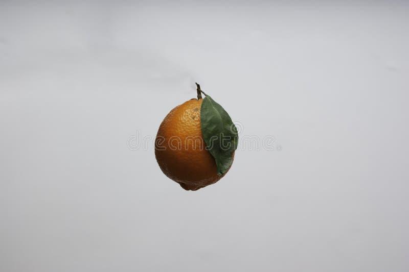 Un limone arancio isolato di Meyer sopra un fondo complementare di colore fotografie stock libere da diritti