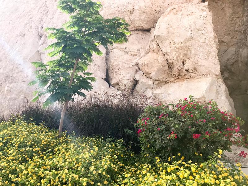 Un lit de fleur avec un petit arbre vert et fleurs jaunes sur un fond de mur en pierre sur un flanc de montagne dans une station  image stock