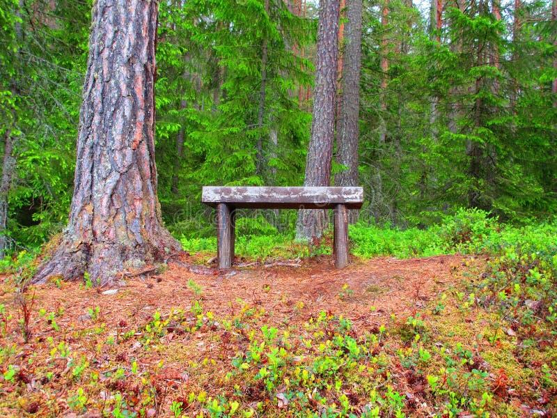 Un lugar en el bosque del pino en donde usted puede tomar un resto foto de archivo