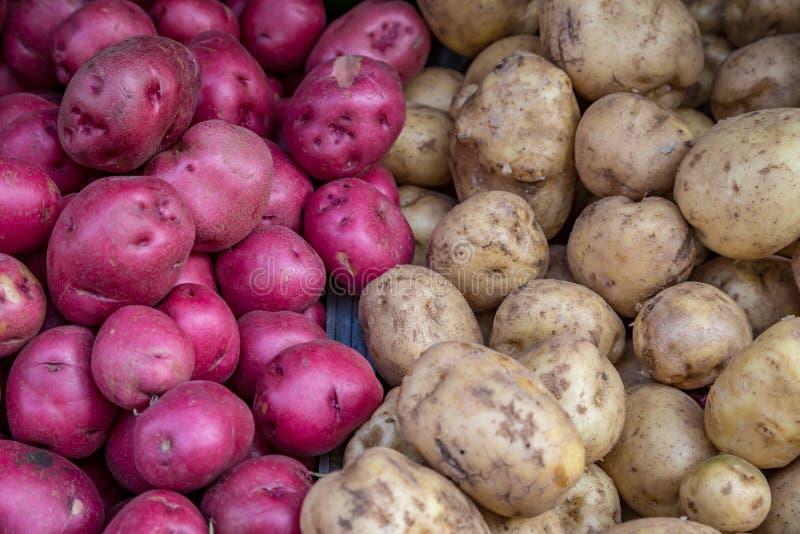 Un mélange des pommes de terre rouges et blanches images stock