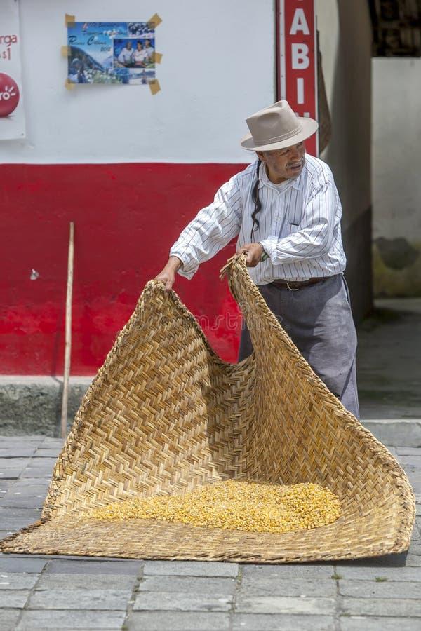 Un maïs de séchage d'homme sur un tapis dans la ville de Peguche en Equateur photographie stock