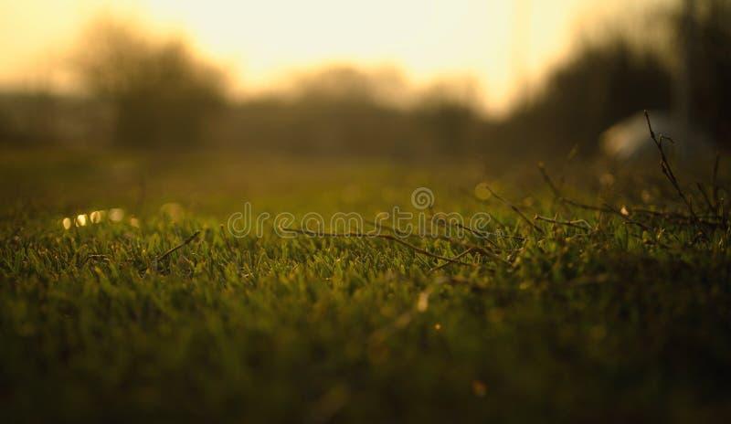 Un macro tir beautyful d'herbe images stock
