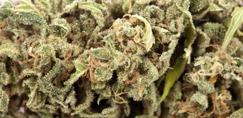 Fondo della cannabis fotografie stock