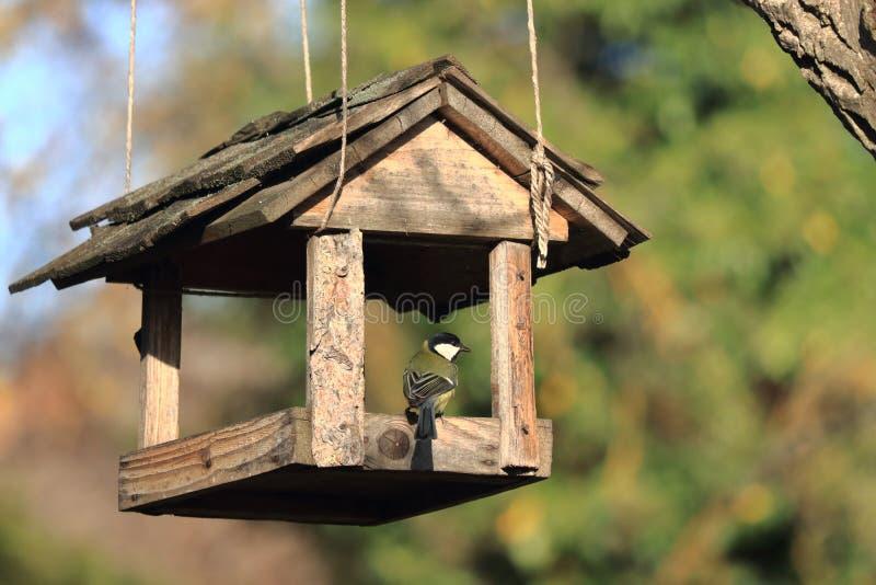 Un maggiore affamato del Parus della cinciallegra dell'uccello si siede sull'alimentatore di legno ed il Sun splende immagine stock libera da diritti