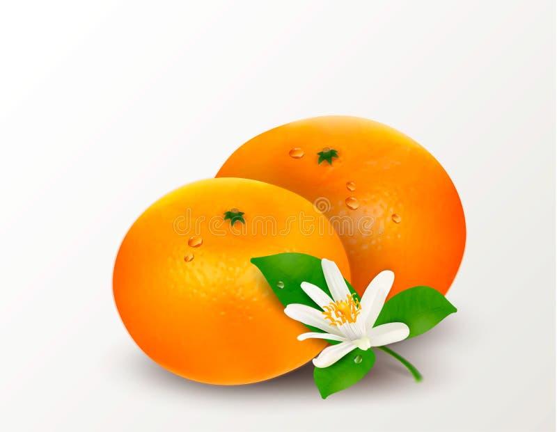 Un mandarino o mandarino degli agrumi isolato su un fondo bianco Illustrazione realistica di vettore illustrazione vettoriale