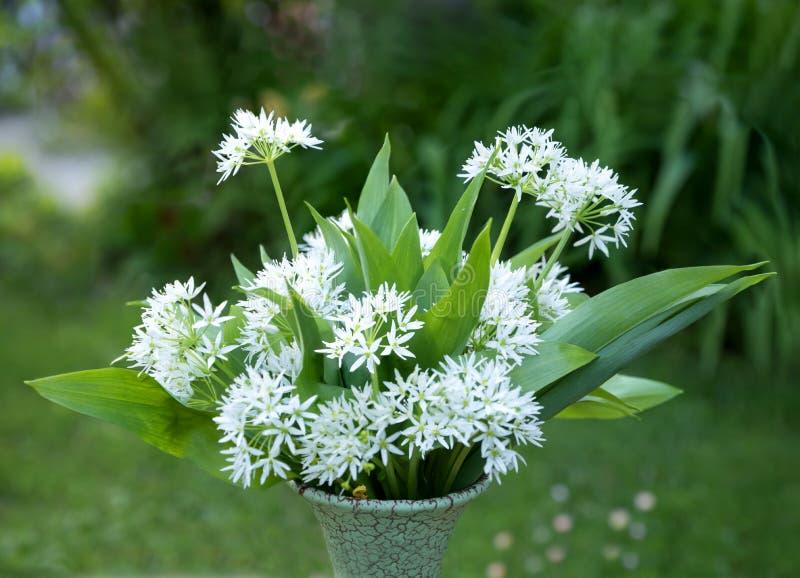 Un manojo de ajo salvaje con los flores, en un florero en el jardín fotografía de archivo libre de regalías