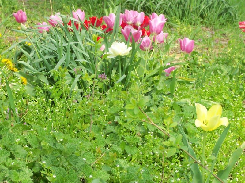 Un manojo de flores diversas, coloridas imagen de archivo