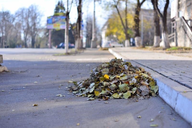 Un manojo de hojas de otoño barrió los limpiadores al borde de la carretera de asfalto a la acera, un día lluvioso aburrido, en e foto de archivo
