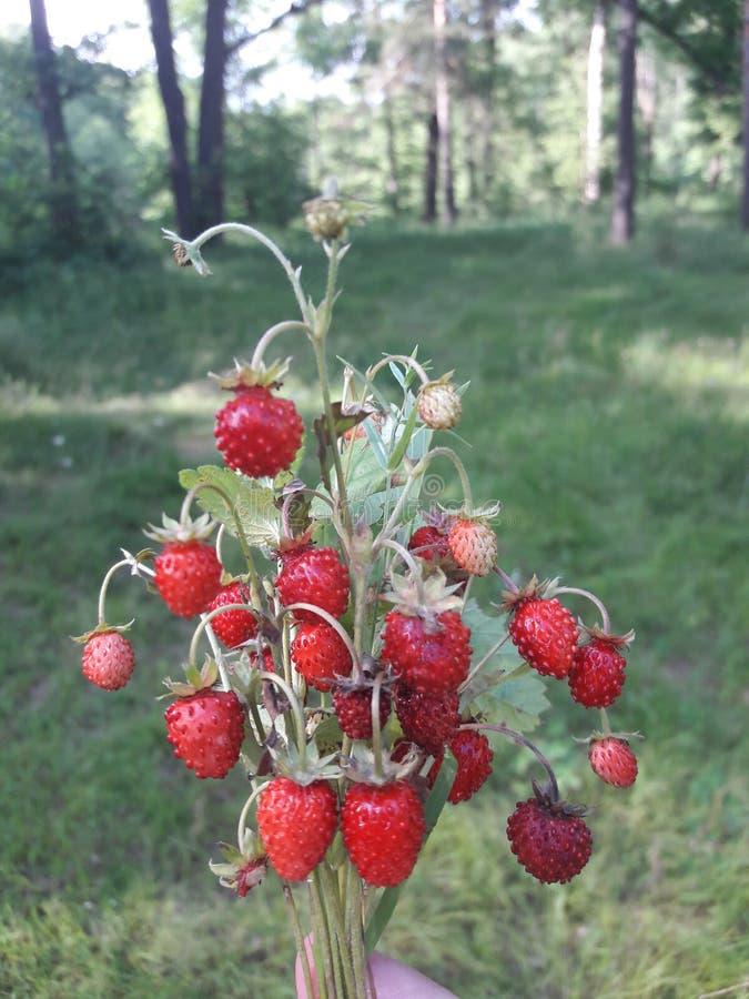 Un manojo de la baya del forrst del verano fotografía de archivo libre de regalías