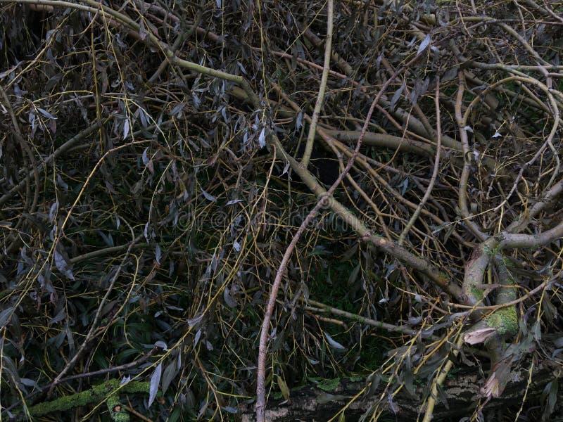 Un manojo de ramas foto de archivo