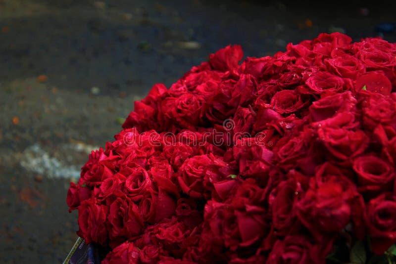 Un manojo de rosa del rojo imagenes de archivo