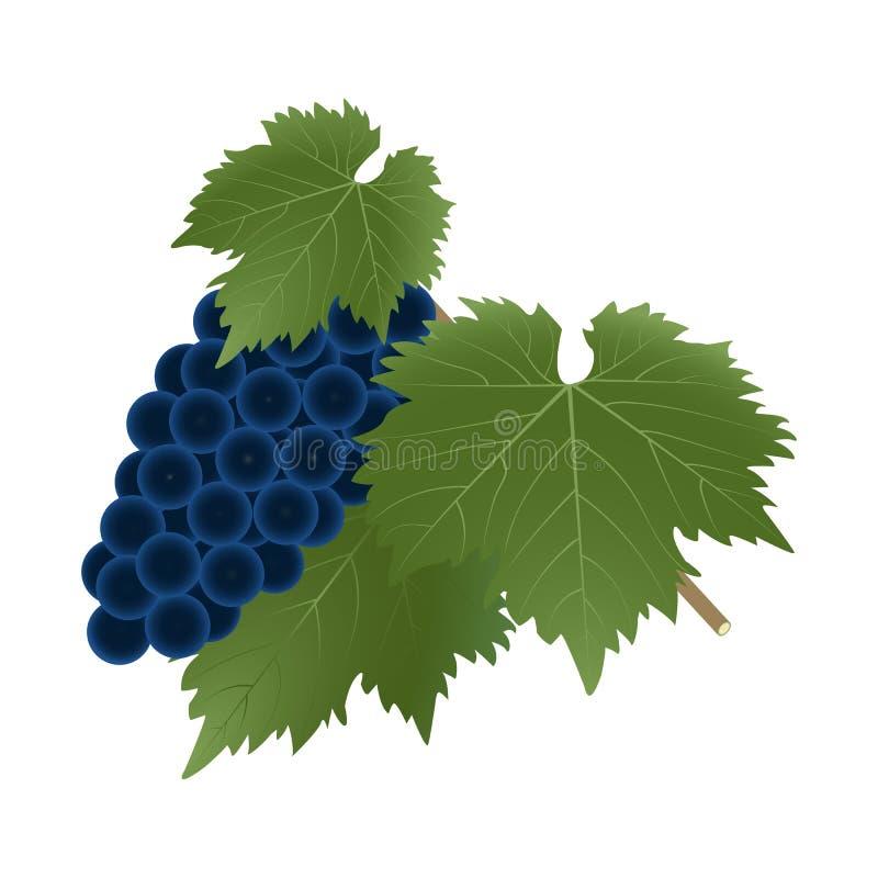un manojo de uvas maduras con las hojas stock de ilustración