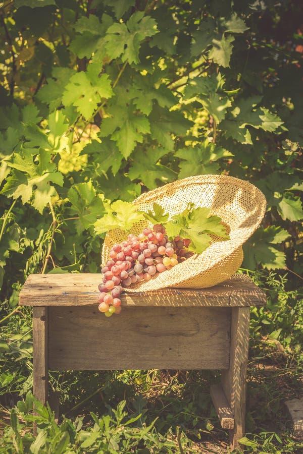 Un manojo de uvas maduras y una mentira del sombrero de paja del verano en un pequeño banco de madera Espacio estacional de la co fotografía de archivo libre de regalías
