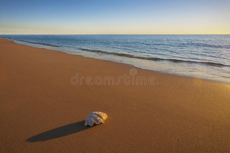 Un mar Shell en la playa foto de archivo libre de regalías