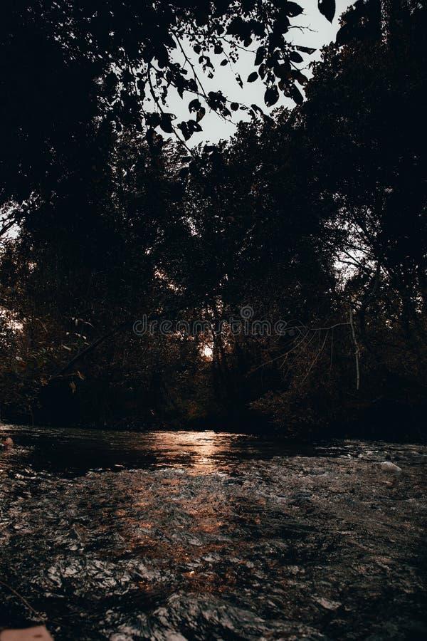 Un marais dans une forêt photographie stock