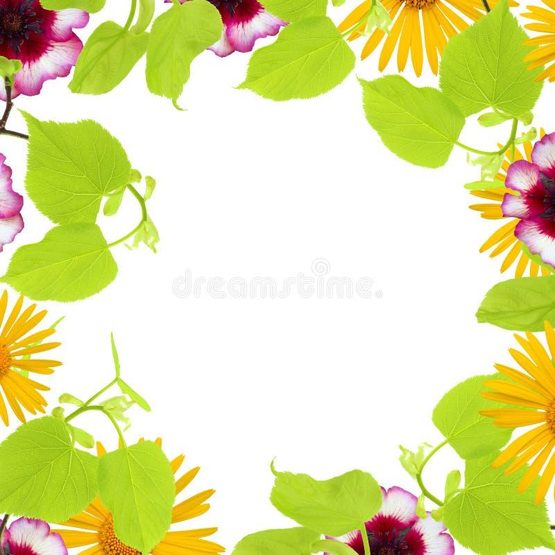 Un marco de la primavera con las ramas de árbol de tilo, manzanilla amarilla y brotes de flor, ramas rosadas y hojas aislados en  imagen de archivo libre de regalías