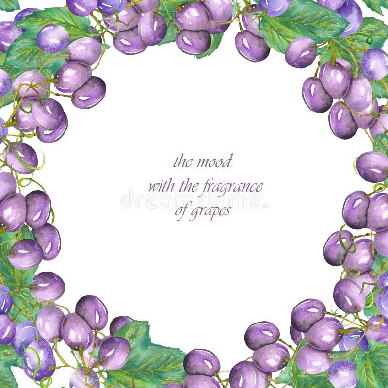 Un marco de los manojos de la acuarela de uvas (violetas) azules, un lugar del círculo de la fruta para un texto libre illustration