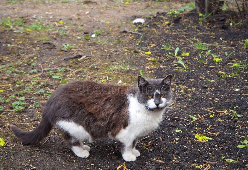 Un marrón con el gato blanco está caminando en el parque imágenes de archivo libres de regalías