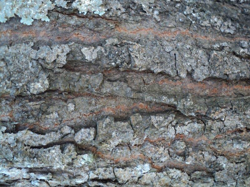 Un marrón grande de la textura de la corteza foto de archivo