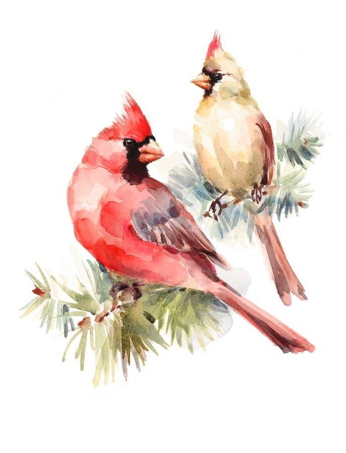 Un maschio di due uccelli dei cardinali e coppie disegnate a mano di amore dell'acquerello dell'illustrazione femminile di Natale royalty illustrazione gratis