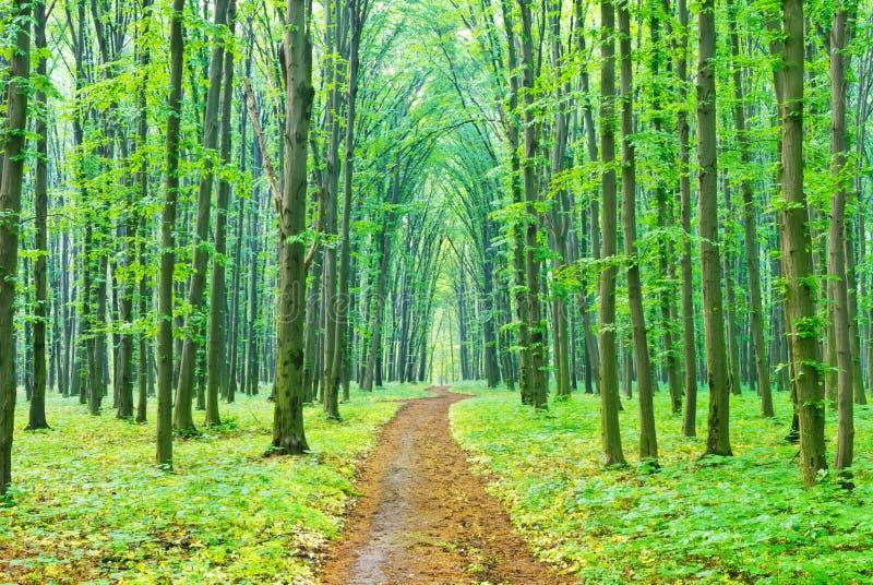 «Un matin d'été sur un sentier piéton dans la forêt. '' photos stock