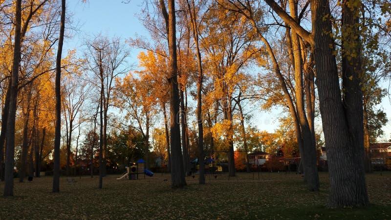 Un matin d'automne en parc photos libres de droits