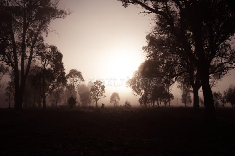 Un matin de folie sur Storm King photo stock