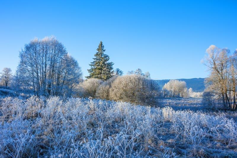 Un matin gelé d'hiver photos stock
