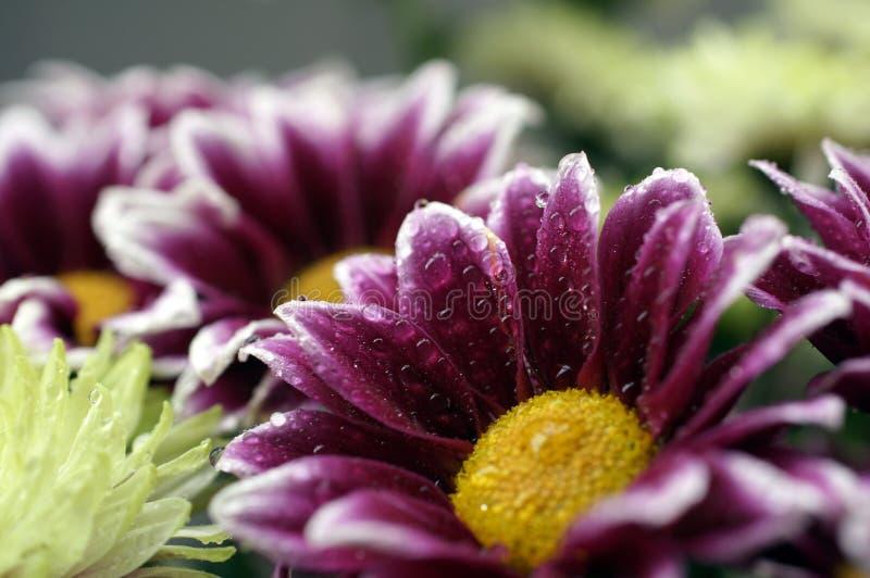 Un mazzo bagnato del rosa e dei fiori gialli fotografia stock