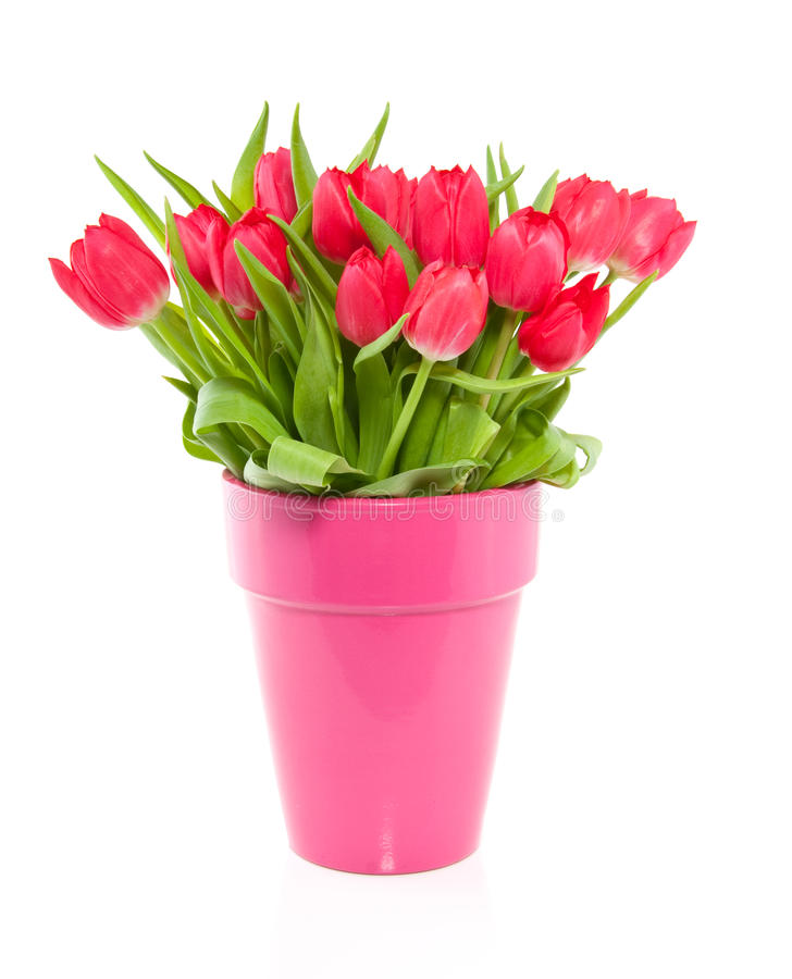 Un mazzo dei tulipani variopinti rossi in un vaso fotografia stock libera da diritti