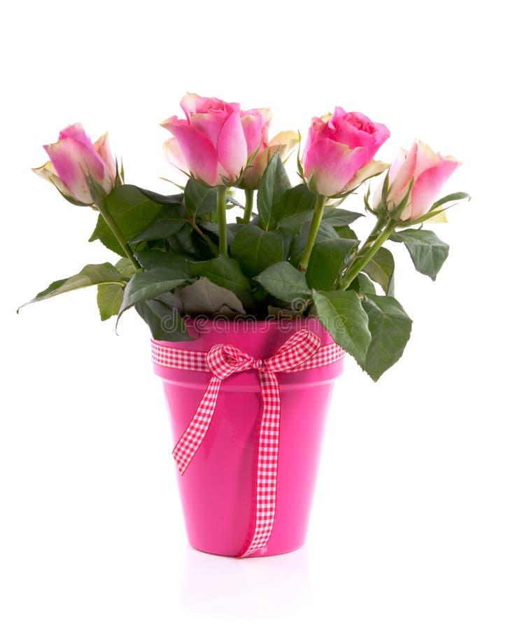 Un mazzo di belle rose dentellare fotografie stock libere da diritti